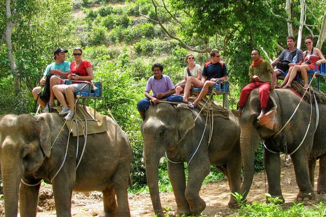 Sightseeing Tour + Elephant Safari