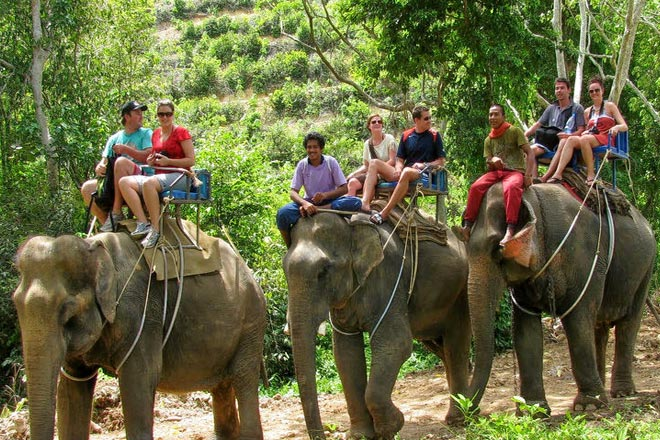 Elephant Care Tour